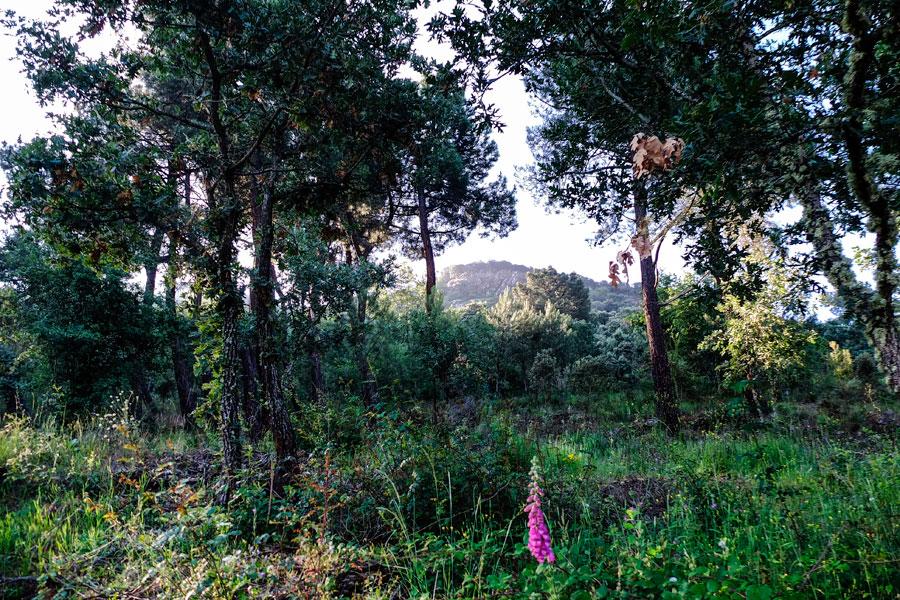 Ruta por el Monte Pajariel