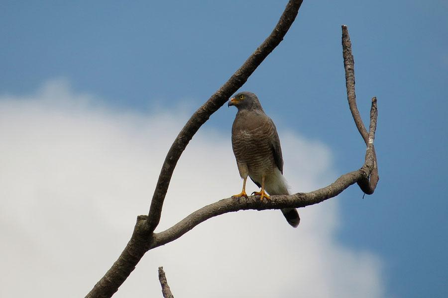 ZEPA Zona de Especial Protección de Aves