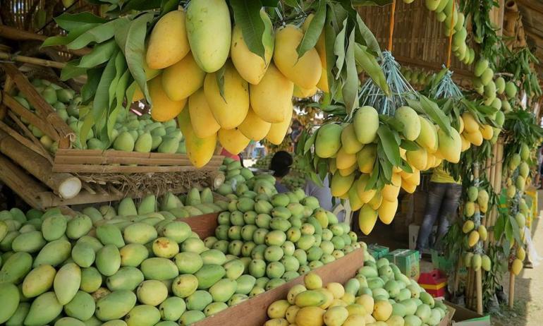 Mangoes during the Guimaras Manggahan Festival   Turista Boy