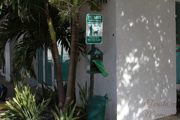 Los animales son bienvenidos en Miami
