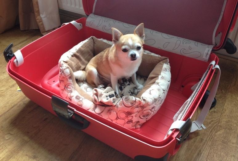 Como viajar para a Europa com o seu pet? (atualizado em agosto de 2017)