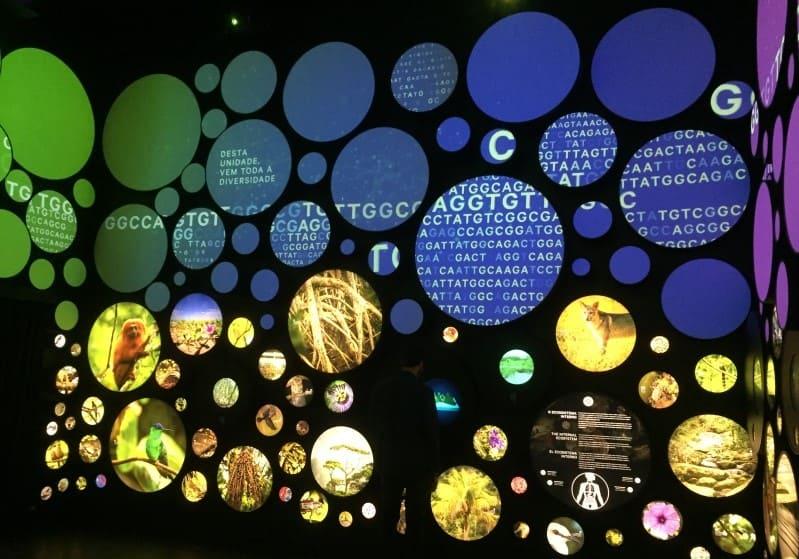 Museu do Amanhã: Cubo da Vida - Ecossistemas