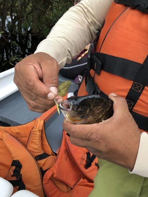 Cruzeiro na Amazônia: pescaria de piranhas.