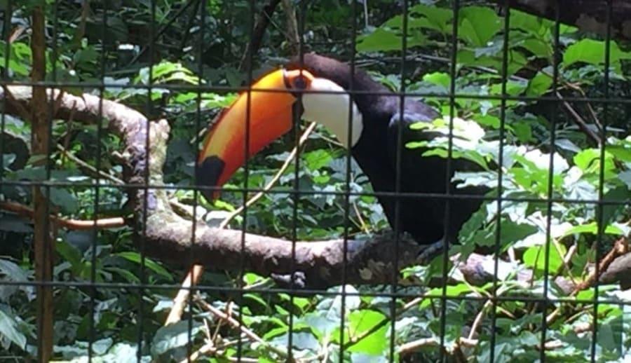 O Parque das Aves abriga vários tucanos.
