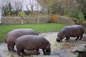Conhecendo o Zoo de Berlim