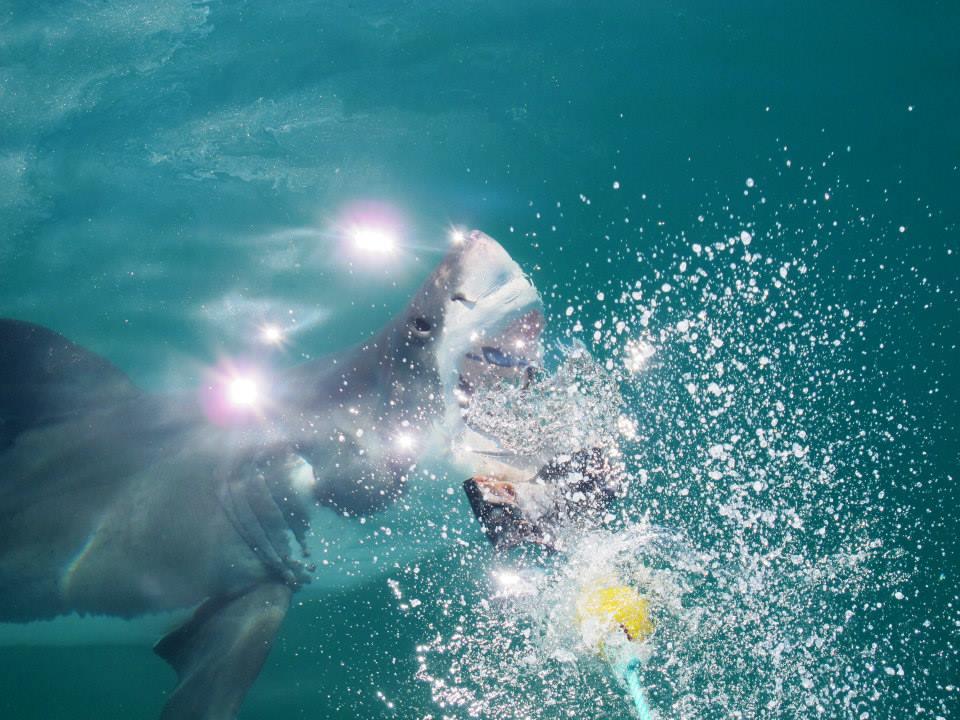 Adrenalina em nível máximo: tudo sobre o mergulho com tubarões brancos em Cape Town