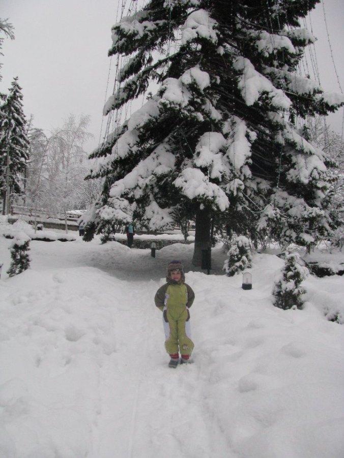 Arieseni, Sovata si Bucin - christmas tree