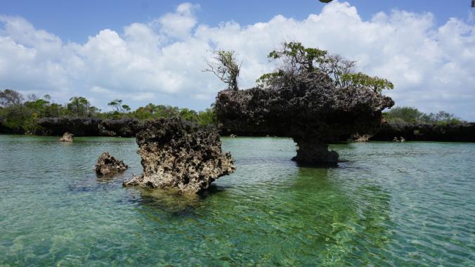 Blue Safari - mangroves forest1