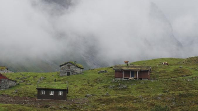 Geiranger - cow