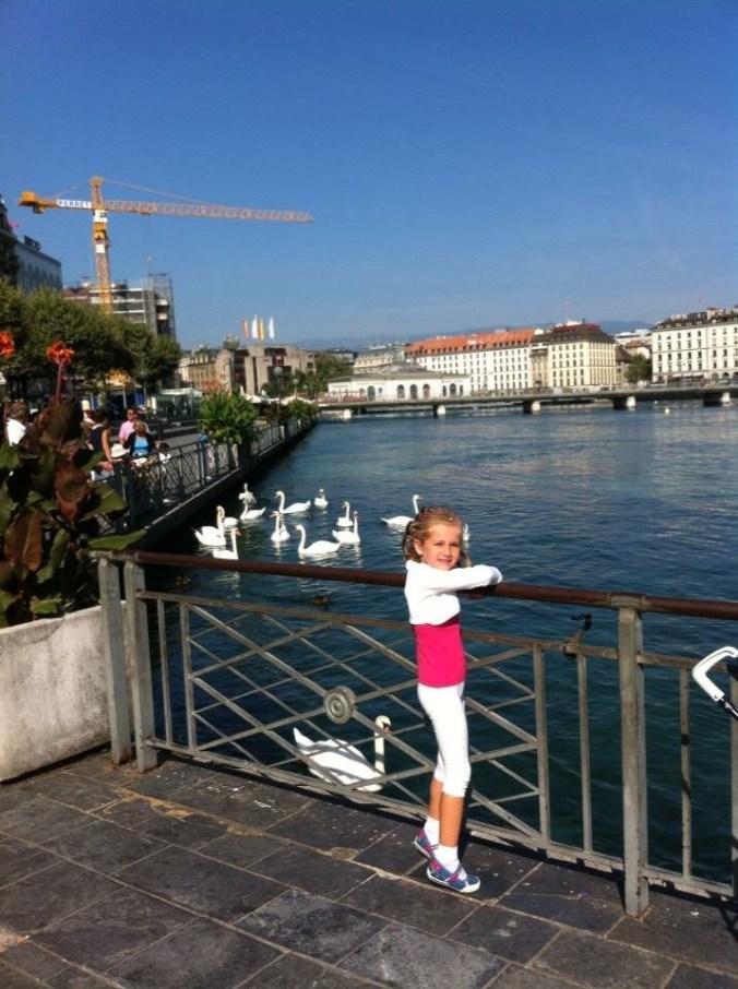 Geneva - swans