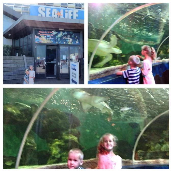 Haga - sealife scheveningen attractions