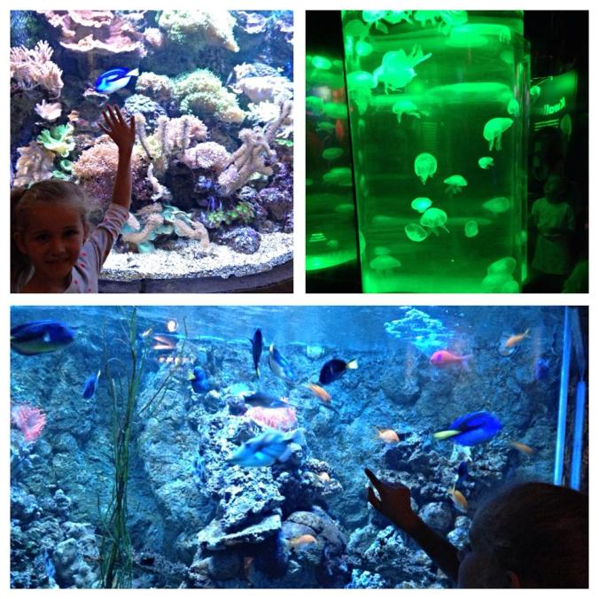 Haga - sealife scheveningen attractions1
