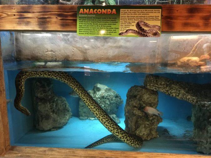 Key West - everglades anaconda