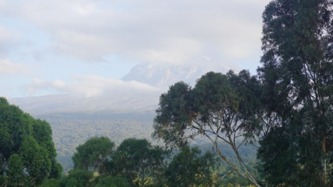 Kilimanjaro - in the morning