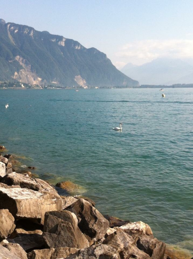 Montreux - swan