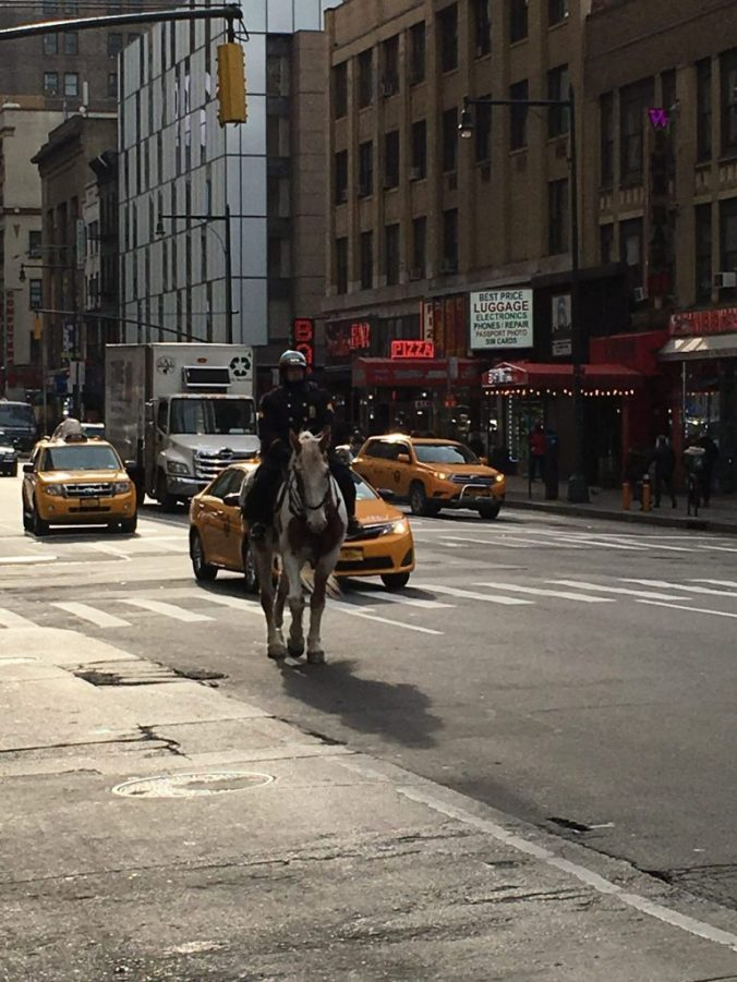 New York - police on horse