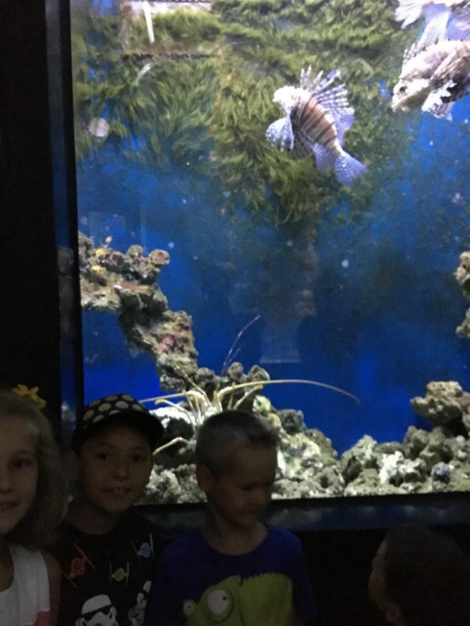 Nyiregyhaza Zoo - aquarium