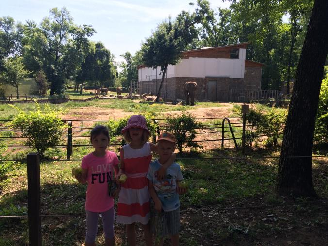 Nyiregyhaza Zoo - elephant