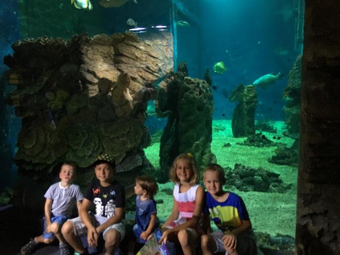 Nyiregyhaza Zoo - fishes