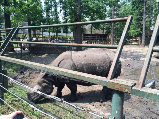 Nyiregyhaza Zoo - rhyno