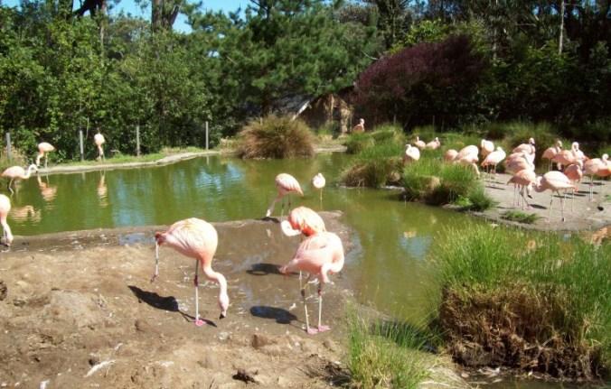 San Francisco - zoo2