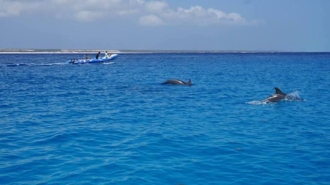 Zanzibar Tanzania - dolphins