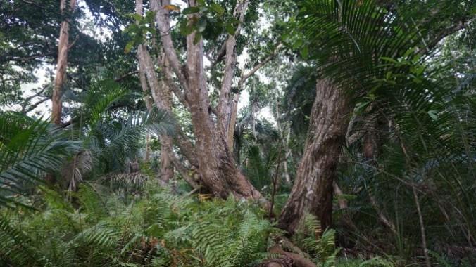Zanzibar - jozani forest