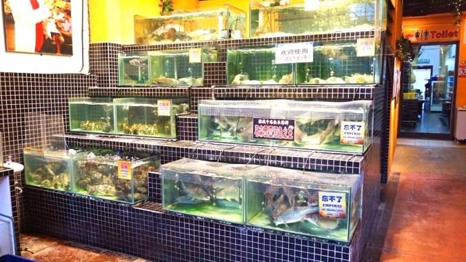 Penang - fish tanks