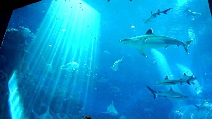 Singapore - Sentosa aquarium2