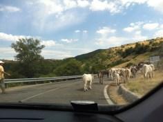 Il traffico sulle strade lucane