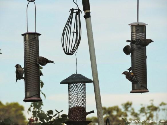 Home birdwatching