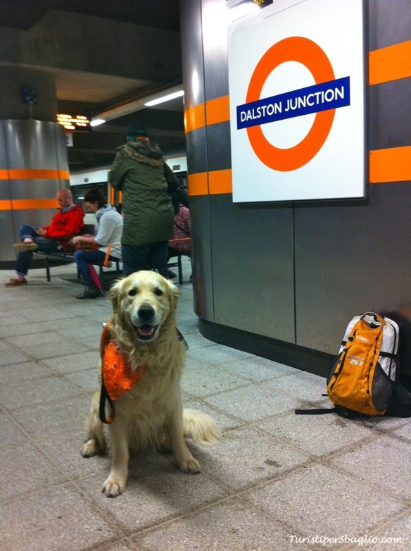 London Tube and Dogs