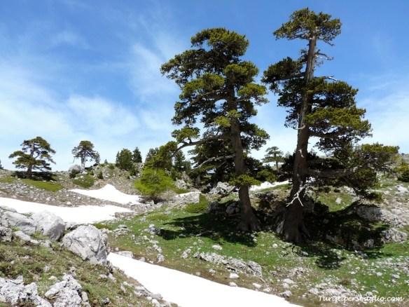 Parco Nazionale del Pollino - 15