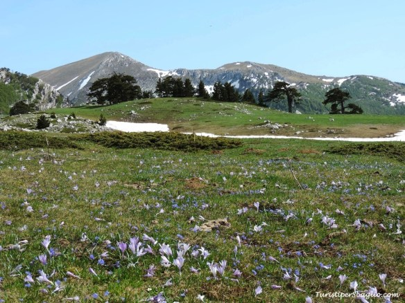 Parco Nazionale del Pollino - 28