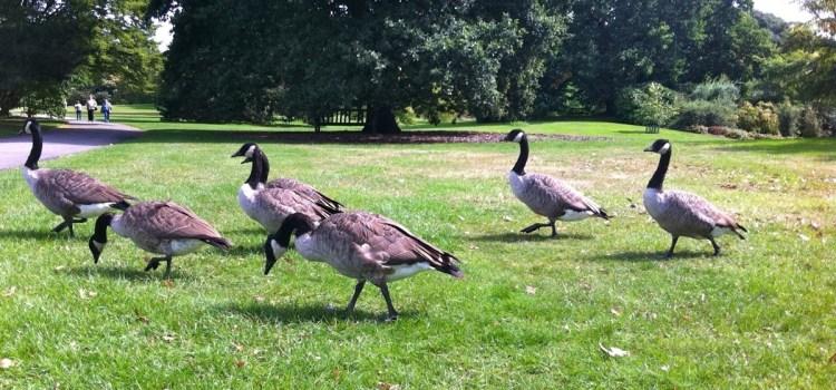 28) Inghilterra 2014 – #Londra, Kew Gardens, la Tree Tops Walk, una passeggiata tra gli alberi e tutto quel che ne consegue…