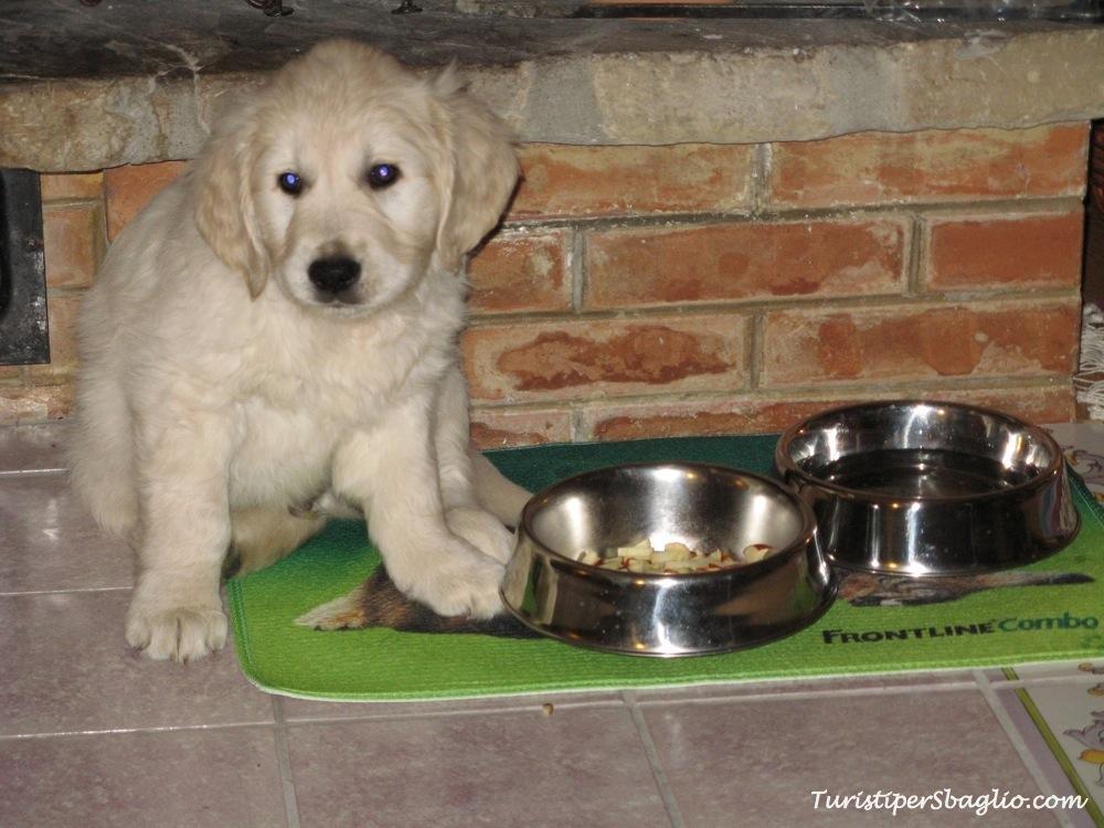 In viaggio col cane Pro e Cons (Parte I): il lato pratico....