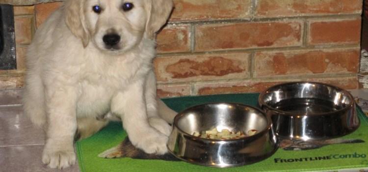 In viaggio col cane Pro e Cons (Parte I): il lato pratico….