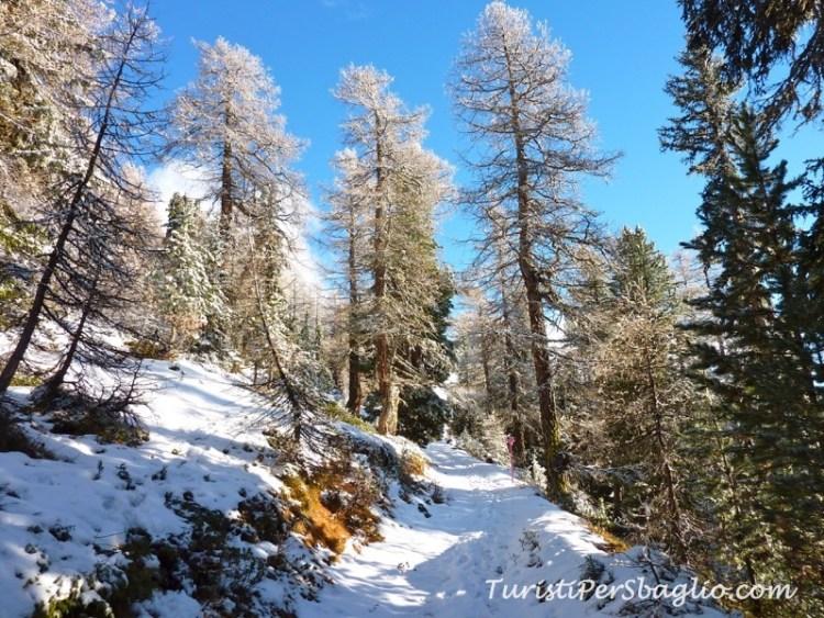 chandolin-svizzera-vallese-sentiero-per-le-ciaspole-9_new