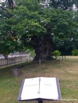 Vimmerby, albero delle limonate Pippi Calzelunghe