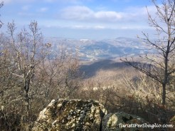 Gallipoli Cognato Monte Croccia