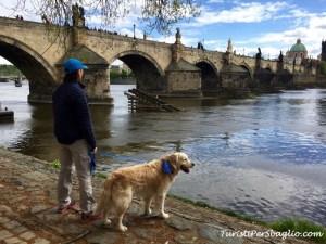 Viaggio in Repubblica Ceca Ponte Carlo dall'Isola di Kampa