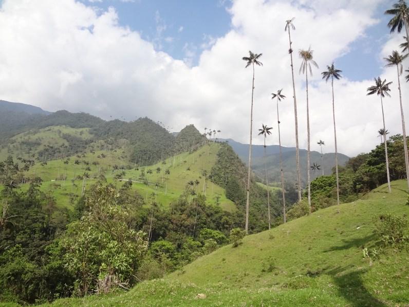 15 Kolumbija DA Valle de Cocora (8)