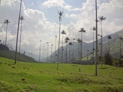 15 Kolumbija DA Valle de Cocora (9)
