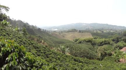 16 Kolumbija kafija (6)