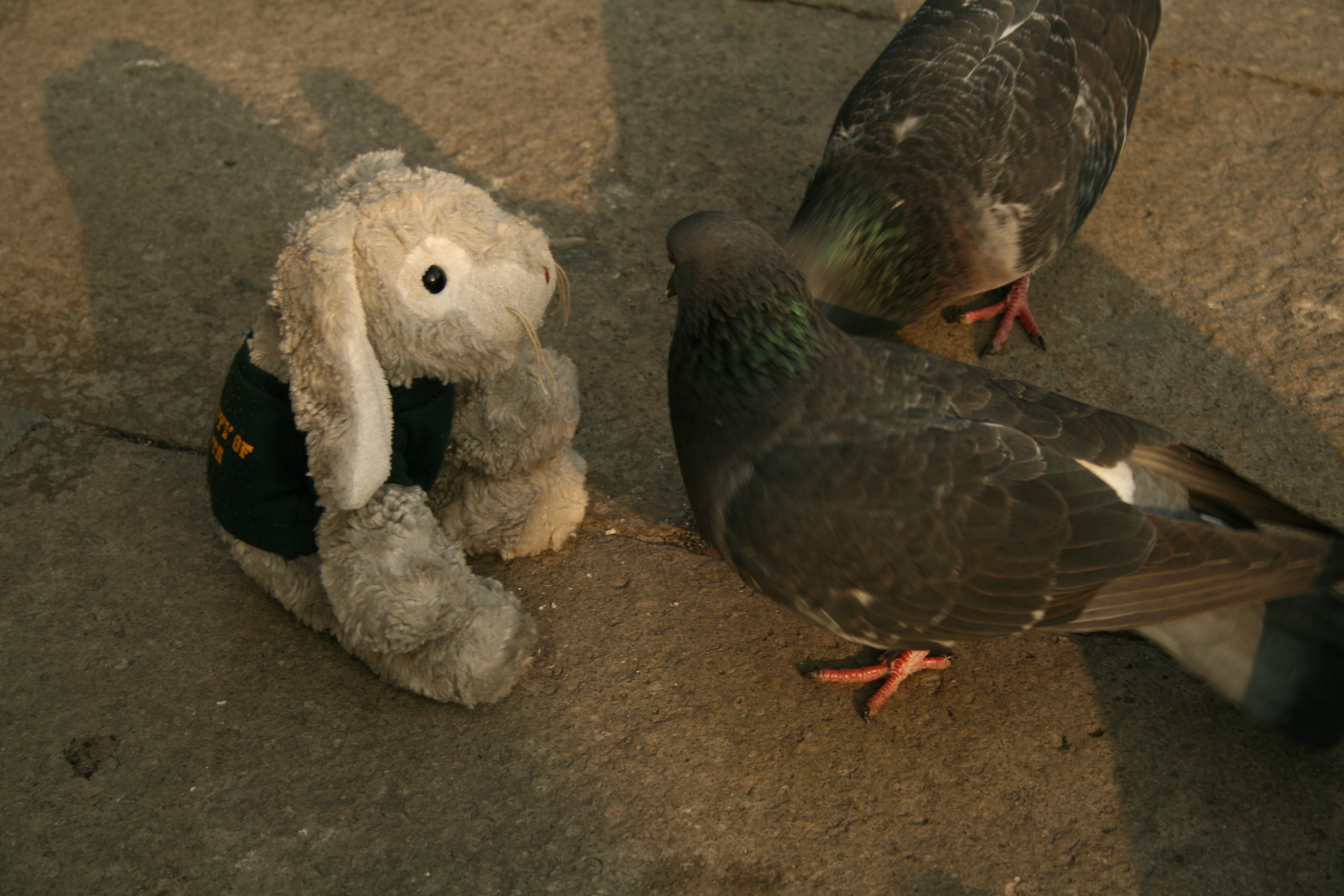 Snuggles talks to the pigeons in hope that they join our cause.
