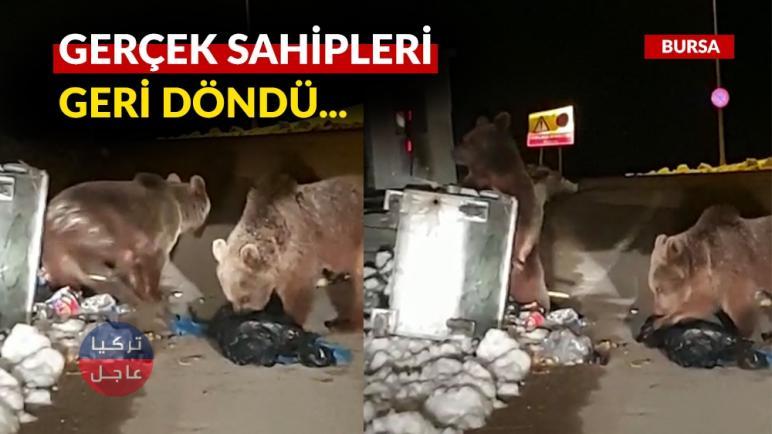 الدببة تترك موطنها وتهاجم المناطق السكنية في بورصا (شاهد بالفيديو)