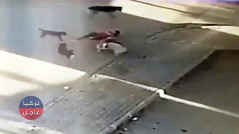 كأنه ولدها.. شاهد بالفيديو كيف أنقذت مواطنة تركية كلبها من بين أنياب الكلاب الضالة