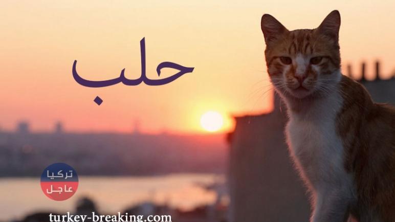 """حلب .. الشعب """"خلع"""" ثيابه في الشوارع ومسؤول حكومي خائف جدا على القطط"""