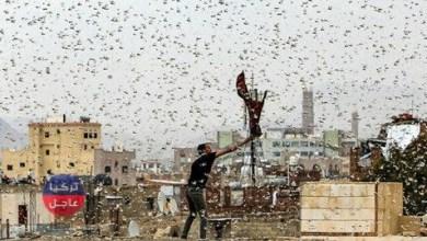 في مشهد مرعب أسراب من الجراد تغطي سماء دمشق (فيديو)