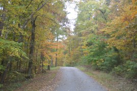Fall colors at Turkey Creek
